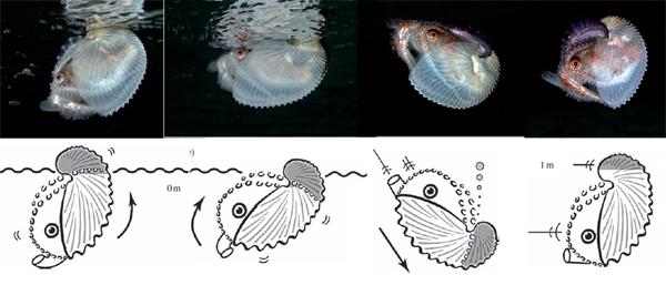 imagen 4 argo octopus