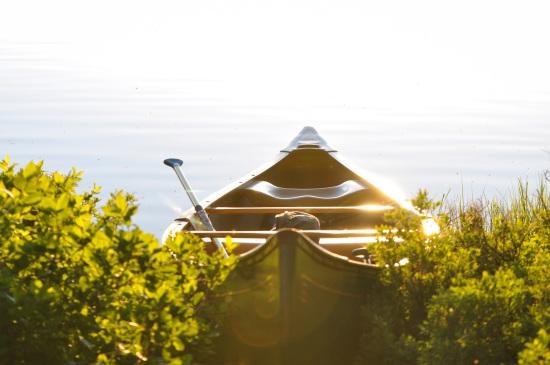 boat-sunlight-morning-leaf-flower-lake-257-pxhere.com