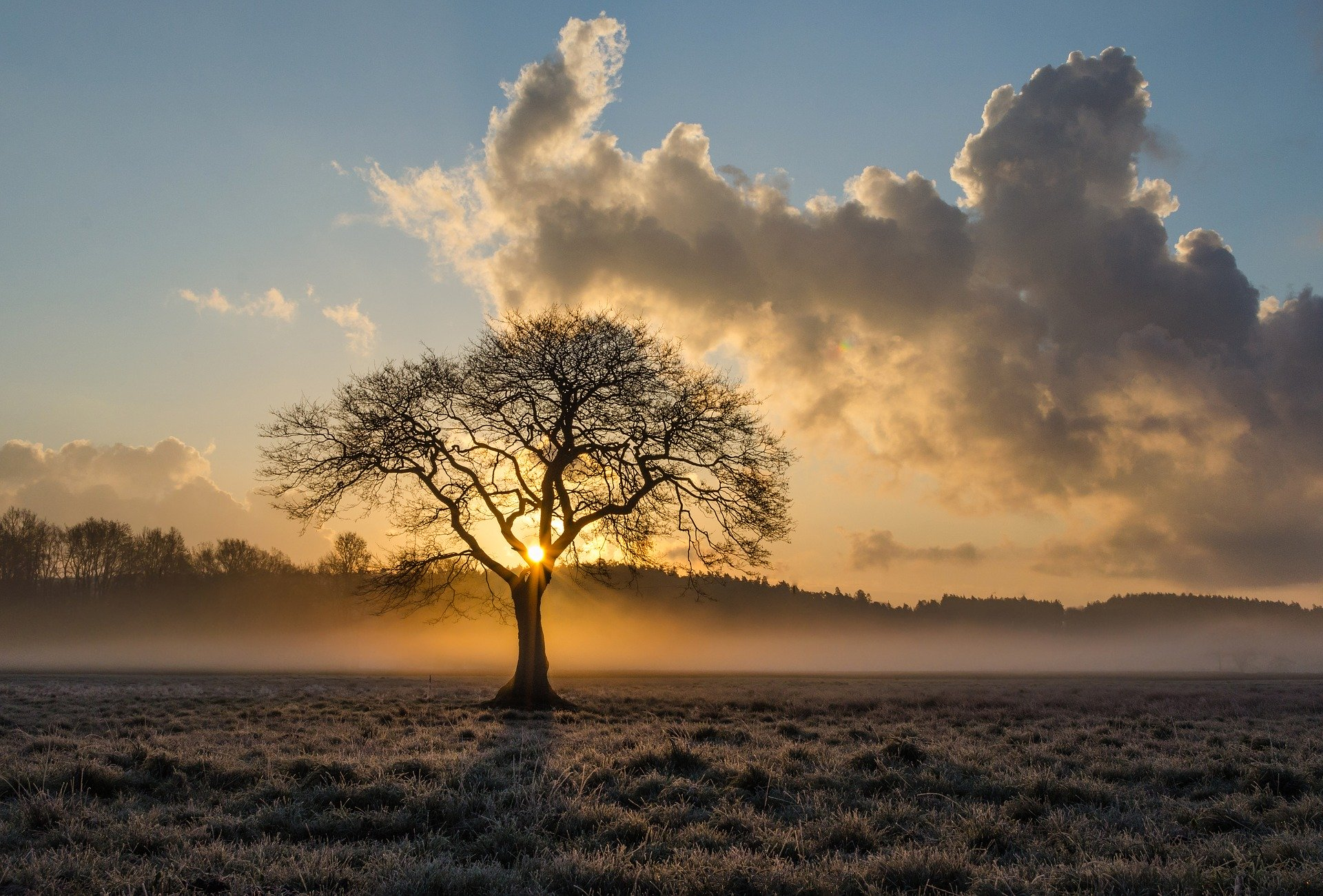 lone-tree-1934897_1920.jpg