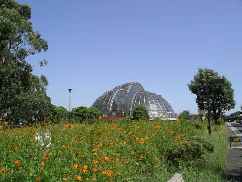 yume-no-shima-greenhouse